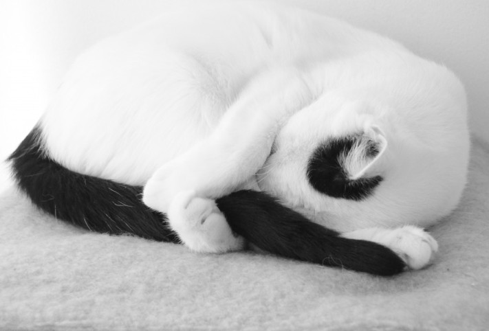 cropped-living-sculpture-cat-photography-mimmie-dana1.jpg