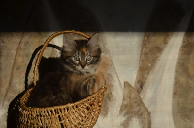 Kitty, 30x40cm signed Fine art print, SEK 1500,00