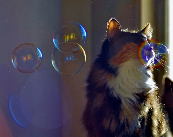 Illusionary bubbles